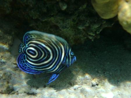 gefährliche fische makadi bay